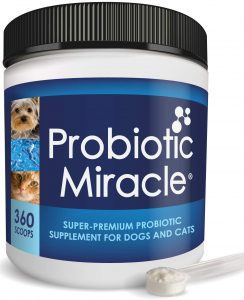 Best Probiotic for French Bulldogs