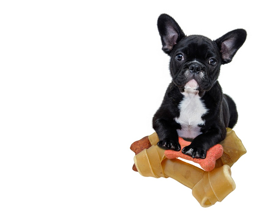 Are French Bulldogs Allergic to Chicken