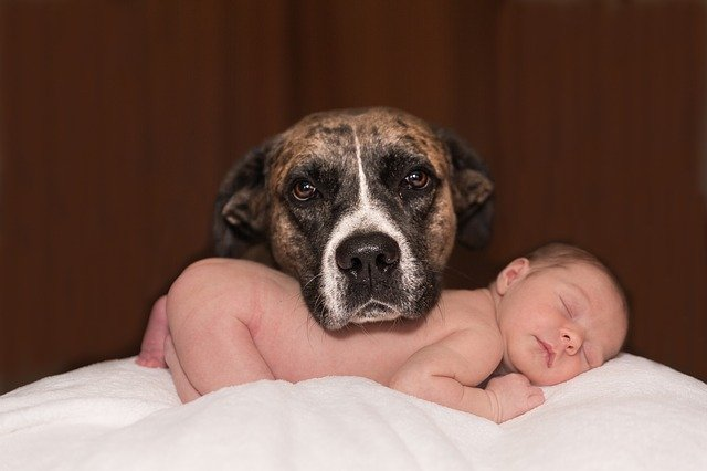 Make a Dog Ready for a New Baby