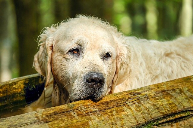 What Are Signs of a Dying Dog