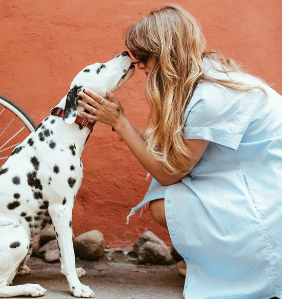 dogs show affection