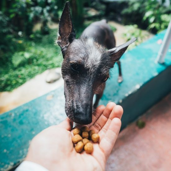 why your dog might like dog food