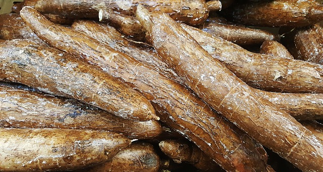 Can Dogs Eat Cassava