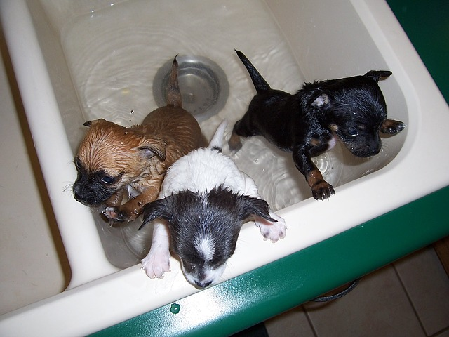 How Soon Can I Bathe My Puppy After Birth