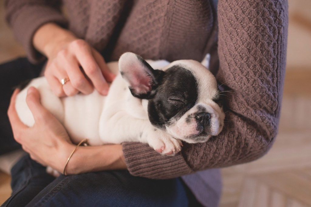 how to train a Bulldog puppy not to bite