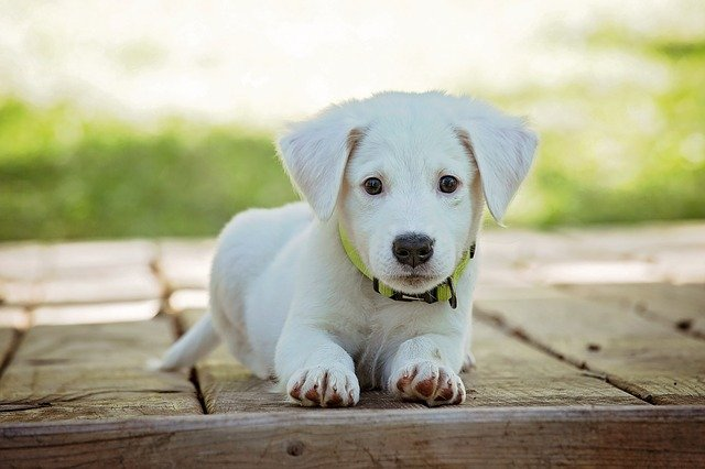 prevent puppy eating everything outside