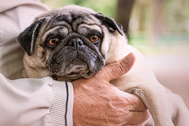 Do old dogs lose control of their bowels
