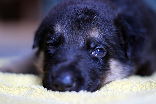 A Simple Guide For Managing Regret From Getting A Puppy