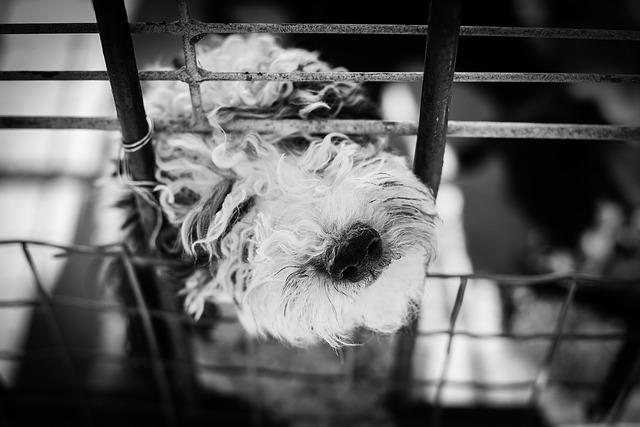 Is keeping a dog in a cage cruel