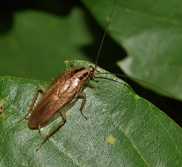 Other Harmful Bugs To Your Dog Besides Grasshoppers