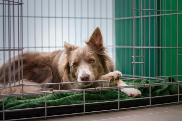 The Role Of The Crate For Dogs