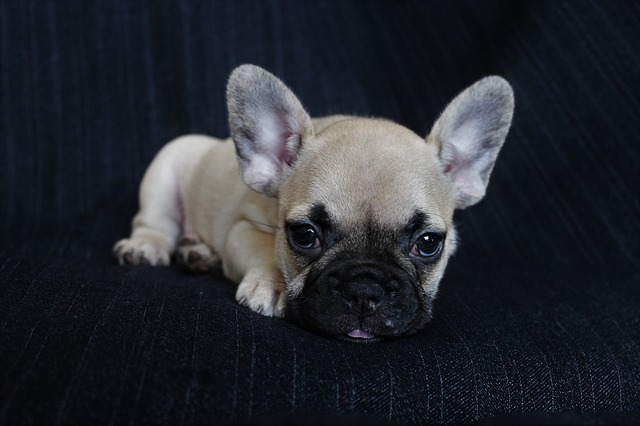 What if my 5-weeks old puppy is not eating their dry food/food at all