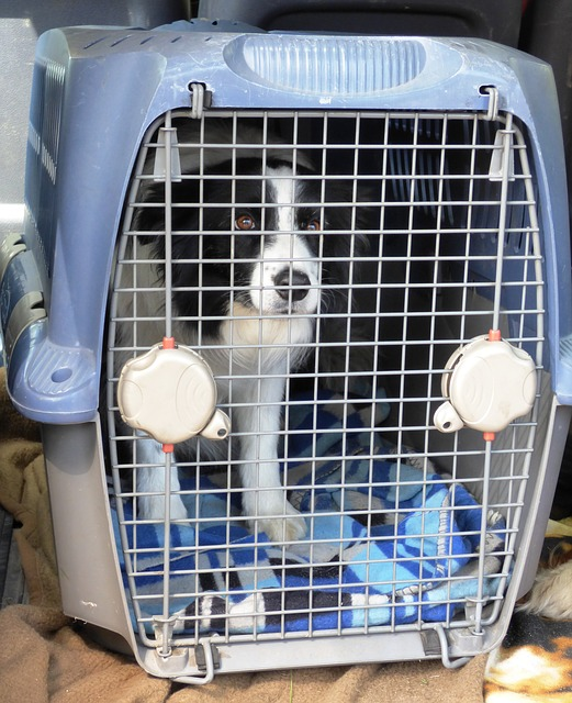 What is dog kennel stress