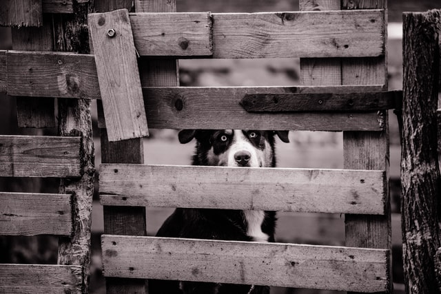 caged dog syndrome conclusion