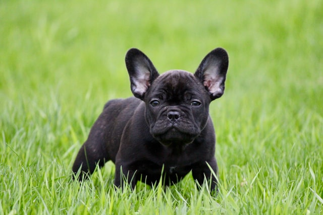 health benefits of rice for dogs