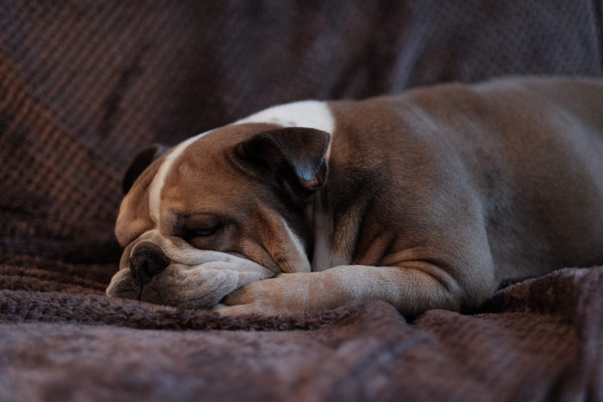 can I catch kennel cough from my dog