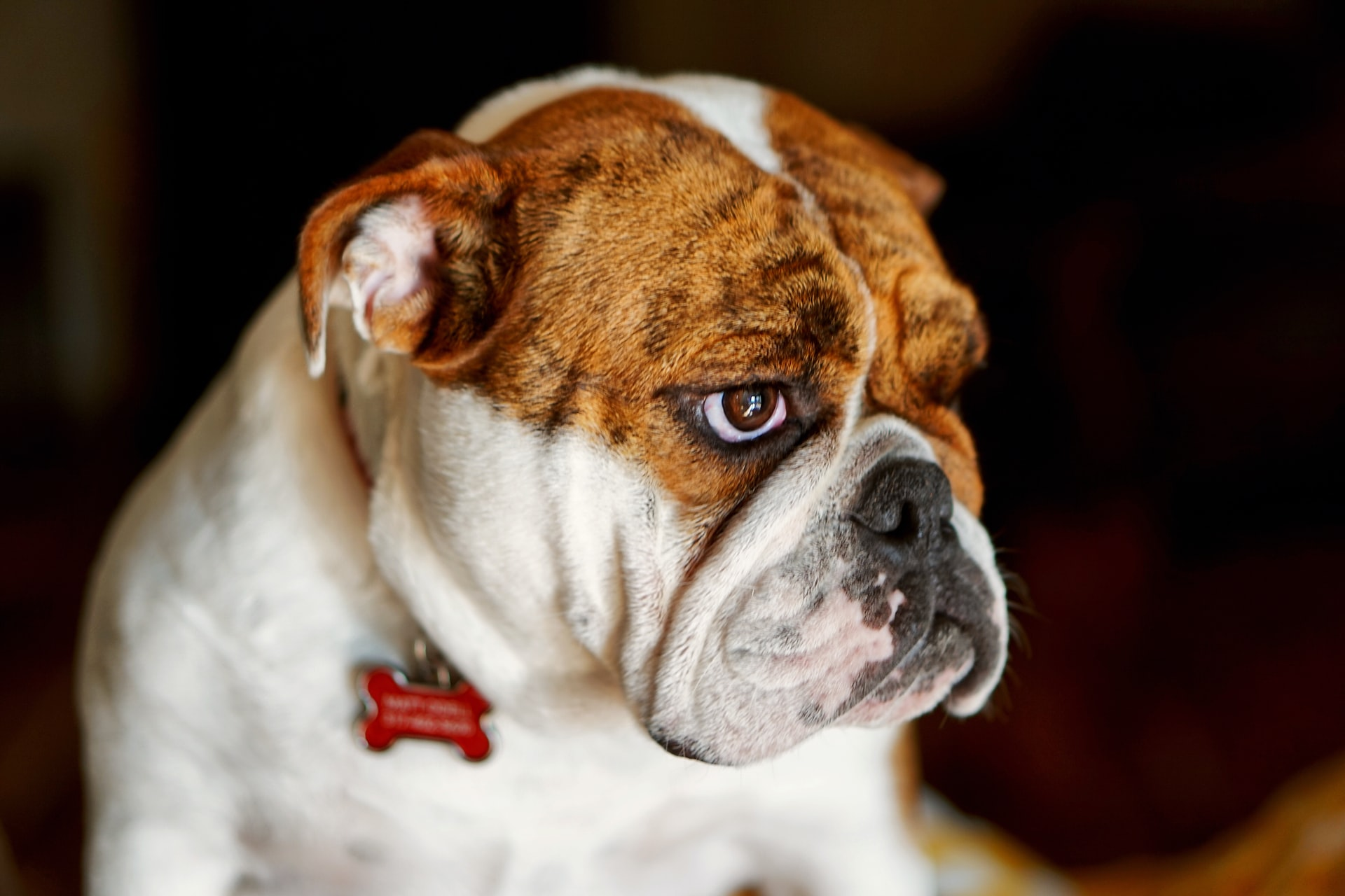 home remedies for dog sneezing blood