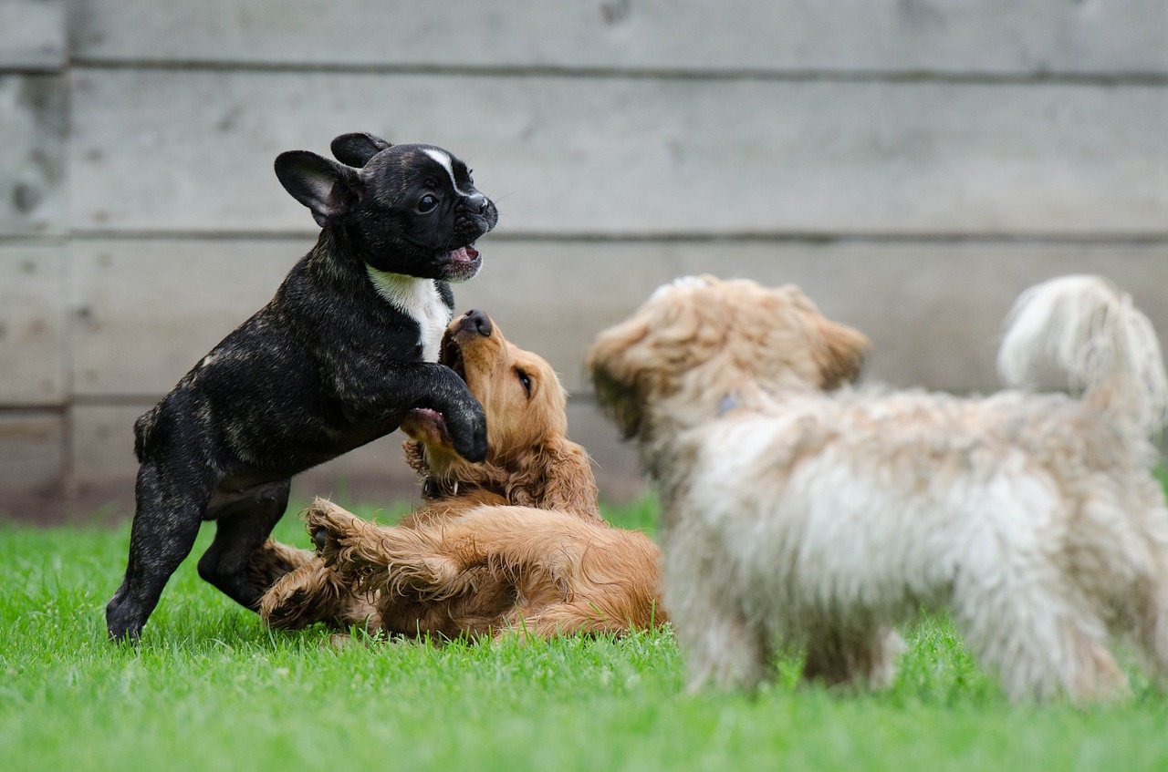 is doggy daycare good for dogs