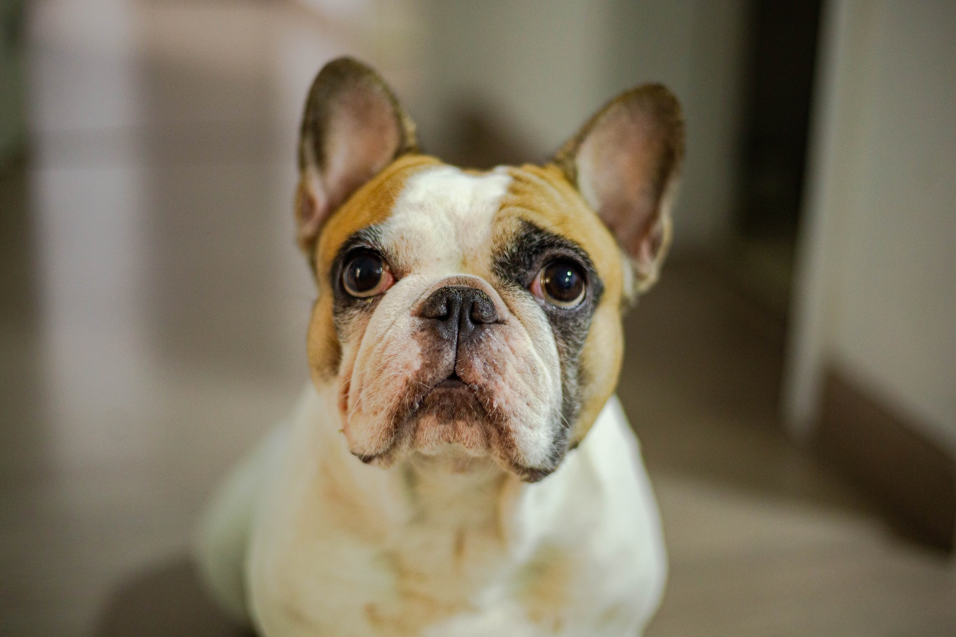 what causes deafness in dogs
