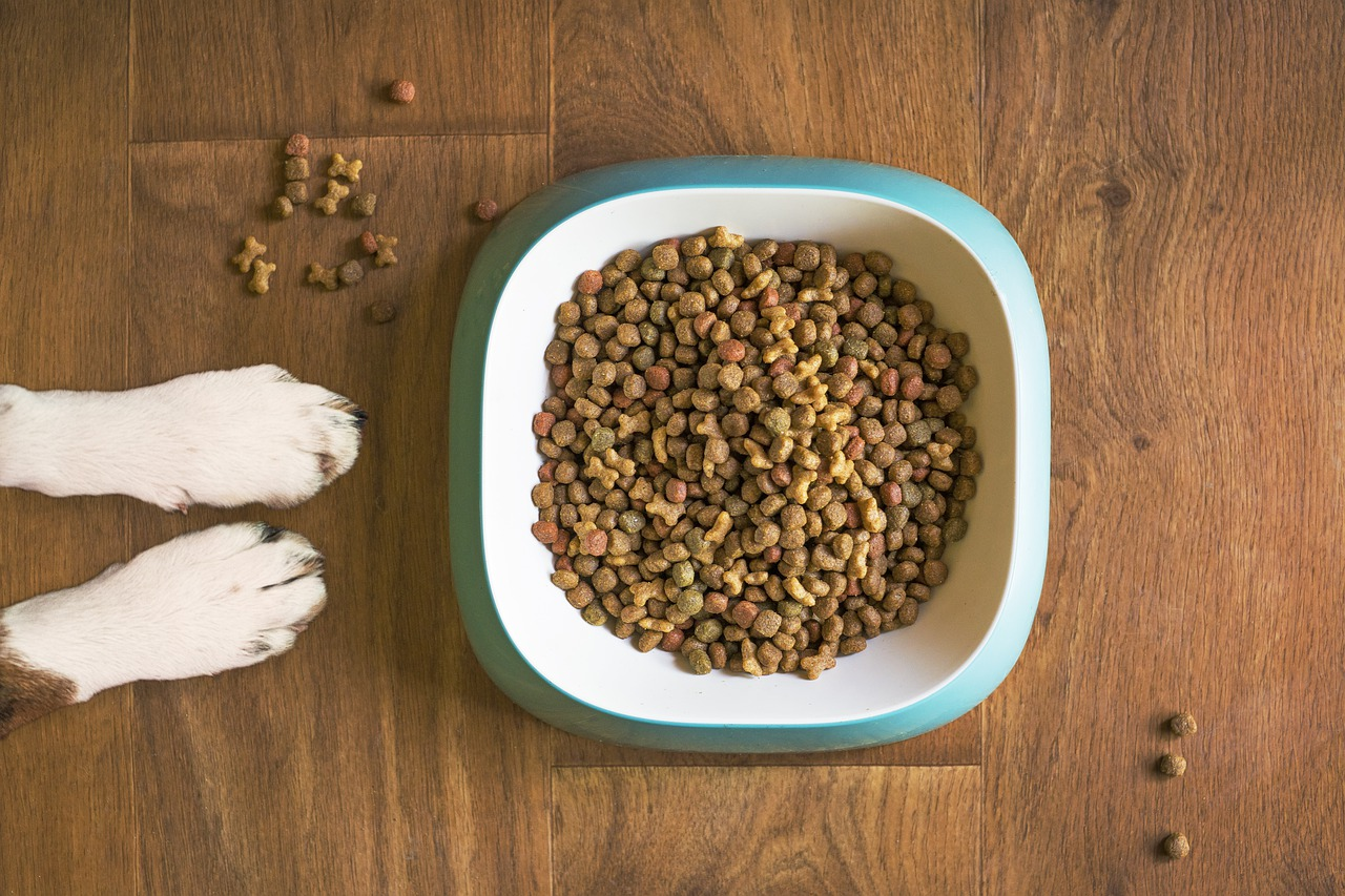 how to stimulate a sick dog's appetite
